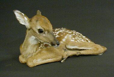 Deer Fawn Deer Hooves Velvet Antlers Taxidermy Freeze